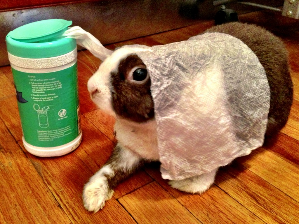 RabbitWipes