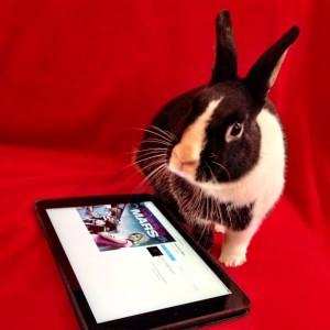 bunnyVM