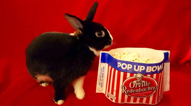The 2015 Summer Popcorn Harvest